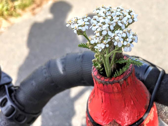 Blumenvase am Radlenker, Fahrer-Schatten